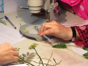 Taller d'identificació de plantes